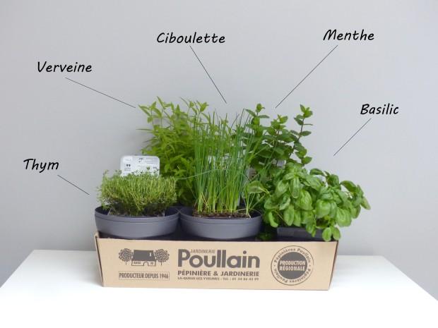 mes petits instants plantes aromatiques